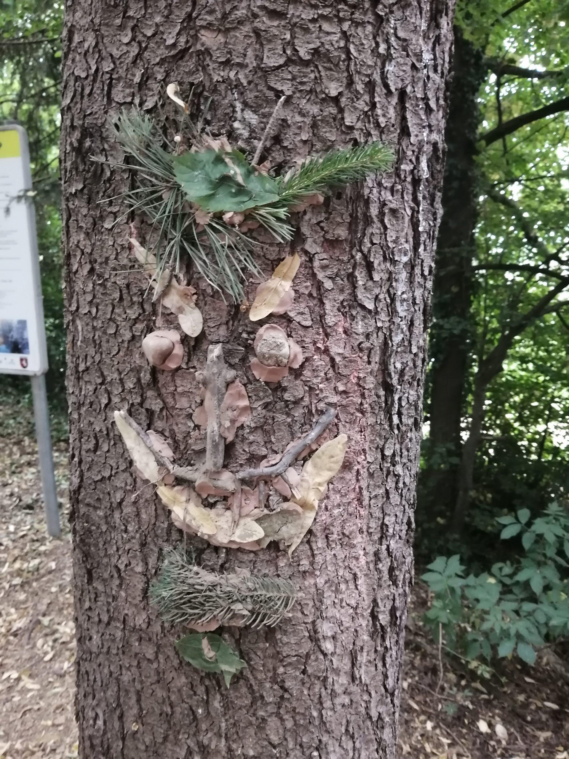 Im  Baumgeisterwald